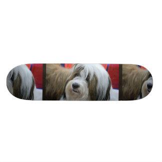 Cute Tibetan Terrier Dog Skate Board