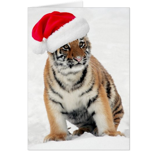 Cute tiger cub in snow wearing santa hat holiday card