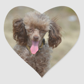 Cute Toy Poodle Heart Stickers
