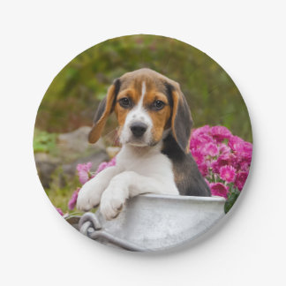 Cute Tricolor Beagle Dog Puppy in Milk Churn party Paper Plate