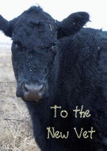 7a2dcc7da72 Cute Vet Graduation Congratulations Ranch Farm DVM Card