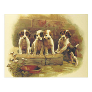 Cute Vintage Puppies Postcard