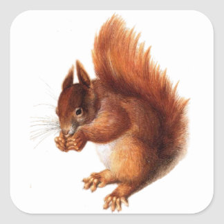 Cute Vintage Red Squirrel Square Sticker