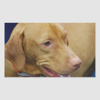 Cute Vizsla Dog Rectangular Sticker