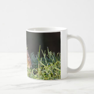 Cute Water Vole Coffee Mug
