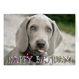 Cute weimaraner puppy birthday card