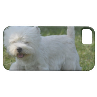 Cute West Highland Terrier iPhone 5 Cover