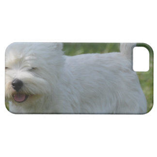 Cute West Highland Terrier iPhone 5 Covers