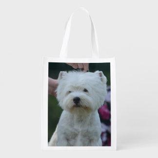 Cute West Highland White Terrier