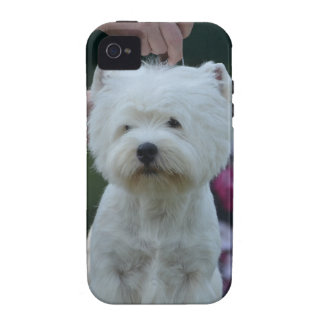 Cute West Highland White Terrier Vibe iPhone 4 Cover