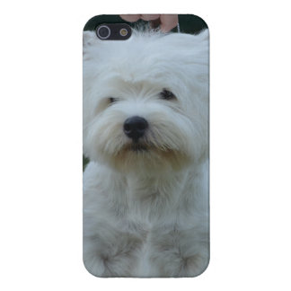 Cute West Highland White Terrier iPhone 5/5S Cases