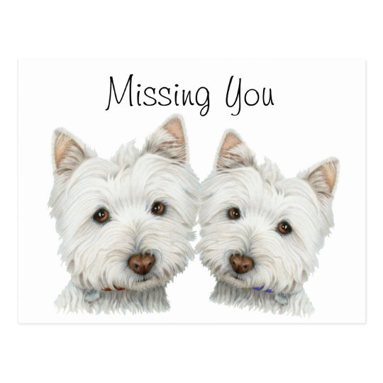 Cute Westie Dogs Postcard