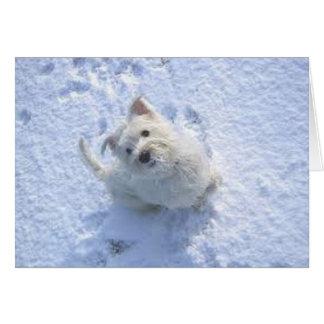 Cute Westie in the Snow Card