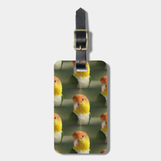 Cute White Bellied Caique Parrot Luggage Tag