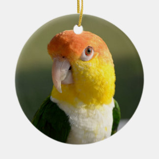Cute White Bellied Caique Parrot Round Ceramic Decoration
