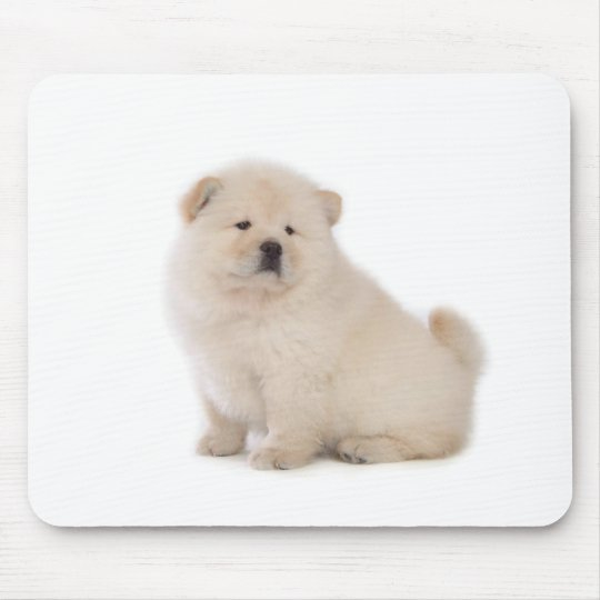 cute white chow chow puppy pup dog mouse