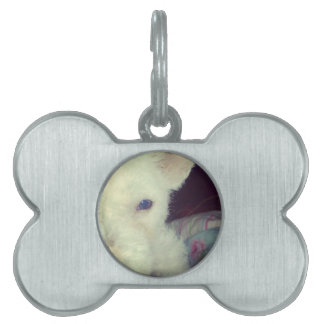 Cute white dog pet name tag