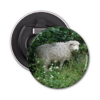 Cute White Fluffy Sheep Eating Bottle Opener Button Bottle Opener