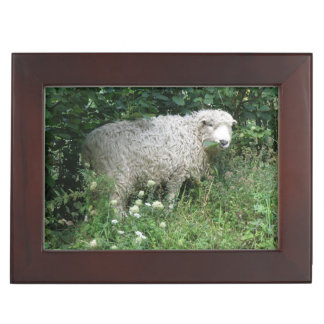 Cute White Fluffy Sheep Eating Keepsake Box