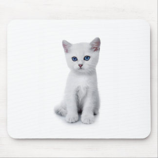 cute white kitten mouse pads