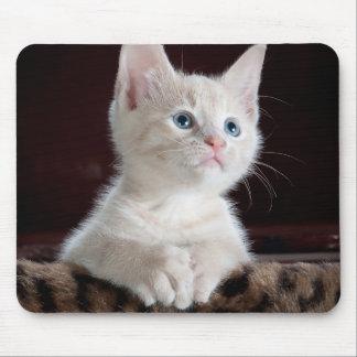 Cute white kitten portrait mouse pads