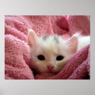 Cute white kitten sleeping in pink blanket poster