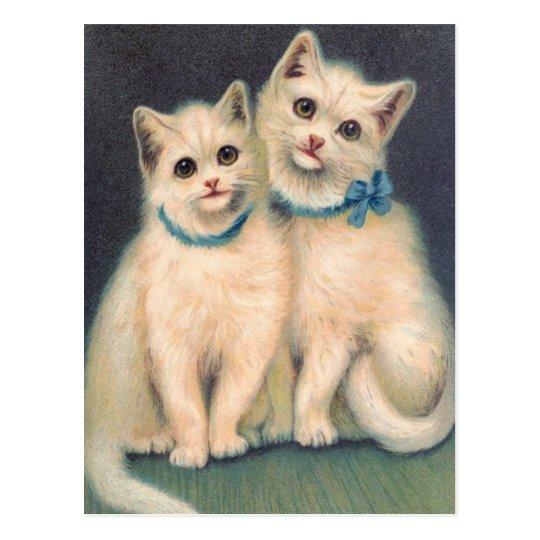 Cute White Kittens Postcard
