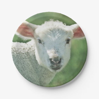 Cute white lamb portrait paper plate