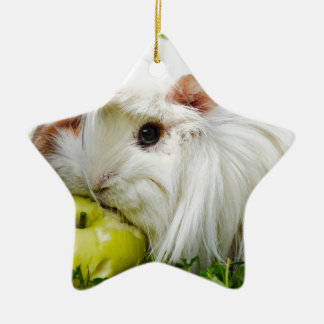 Cute White Long Hair Guinea Pig Eating Apple Ceramic Star Decoration