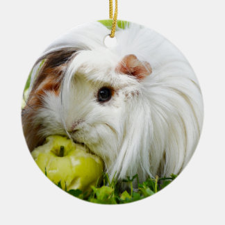 Cute White Long Hair Guinea Pig Eating Apple Round Ceramic Decoration