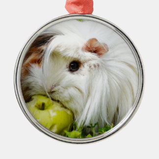 Cute White Long Hair Guinea Pig Eating Apple Silver-Colored Round Decoration