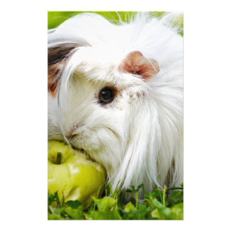 Cute White Long Hair Guinea Pig Eating Apple Stationery