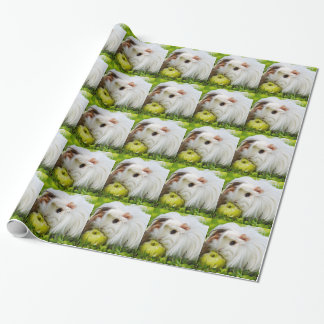 Cute White Long Hair Guinea Pig Eating Apple Wrapping Paper