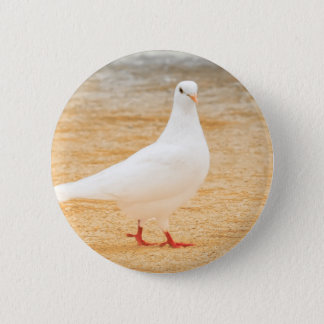 Cute White Pigeon Bird 6 Cm Round Badge