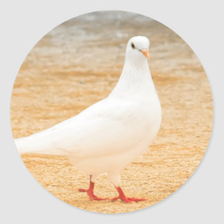 Cute White Pigeon Classic Round Sticker