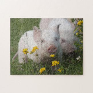 Cute White Piglets in Yellow Flowers - Baby Animal Jigsaw Puzzle