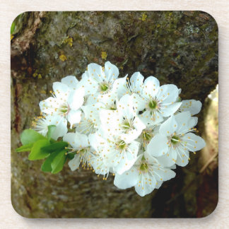 Cute White Plum Blossom Coaster