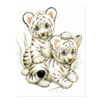 Cute White Tiger Cubs Post Card