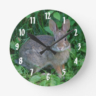 Cute Wild Brown Rabbit Wallclock