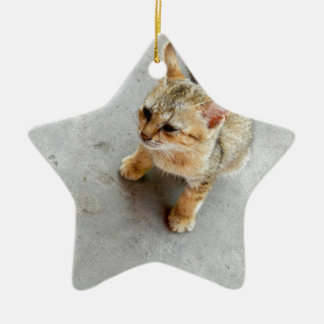 Cute wild cat kitten ceramic star decoration