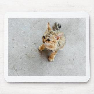 Cute wild cat kitten mousemat