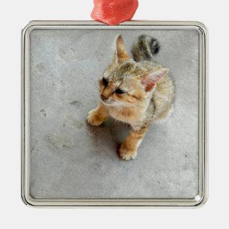 Cute wild cat kitten Silver-Colored square decoration