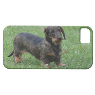 Cute Wire Haired Dachshund iPhone 5 Cover