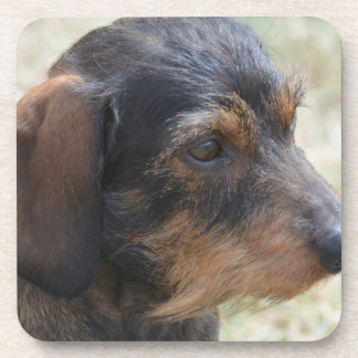 Cute Wire Haired Dashchund Coaster