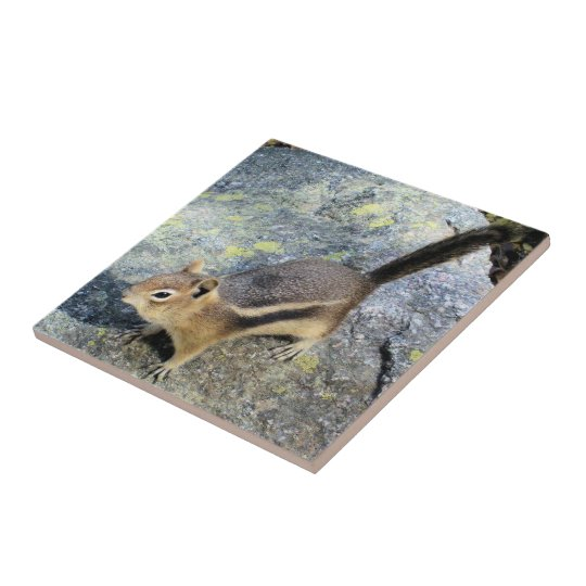 Cute Woodland Chipmunk Rodent Wildlife Photography Small Square Tile
