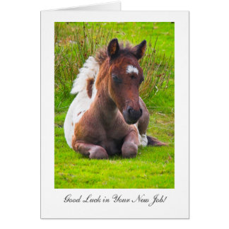 Cute Yearling Foal - Good Luck in Your New Job Greeting Card