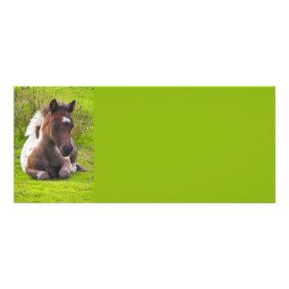 Cute Yearling Foal rack cards