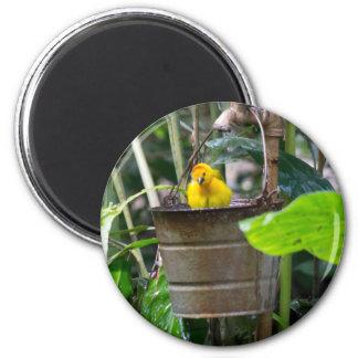 Cute, yellow bird bathing in a bucket 6 cm round magnet