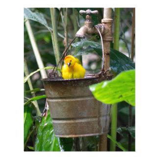 Cute, yellow bird bathing in a bucket letterhead