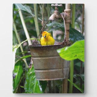 Cute, yellow bird bathing in a bucket photo plaque